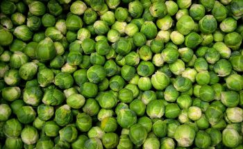 Sprouts O'Clock